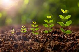 Show how your business grows just like planting a tree. It is to serve as symbolism for the work we put in as business owners.